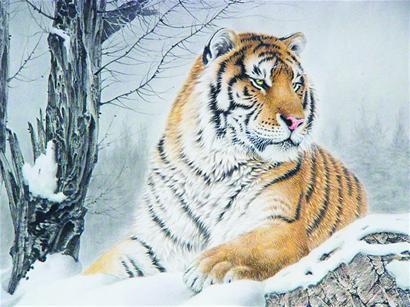 素描老虎画法步骤图