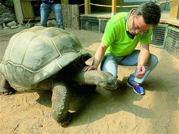 """为了让""""落户""""动物园的象龟"""