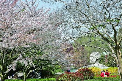 园中红楠,水杉,樱花,石岩杜鹃,桃花等名贵花木,摇曳生姿.