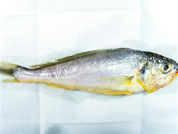此外,还可以用手刮一下鱼鳞,如果手变黄了,也证明染色了.