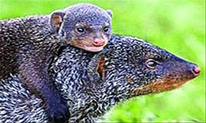 物种灭绝让全球进化重置