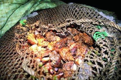 """海螺八百斤没等卸货就被逮 ·通 告 ·下周两次降水降温 ·洗衣机""""图片"""