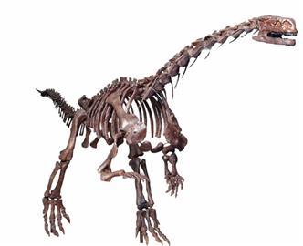 """让你从这些古老的""""遗迹""""里感受远古时代的恐龙世界.-从珍稀展品"""