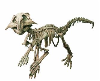 孔子鸟的骨骼结构十分完整
