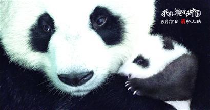 迪士尼自然跨国团队制作的动物大电影《我们诞生