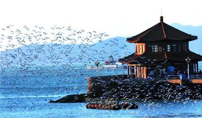 海鸥栖息地范围扩大