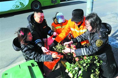 调查  带刺玫瑰花 扔进垃圾桶      玫瑰花素来被情侣用来表达爱意