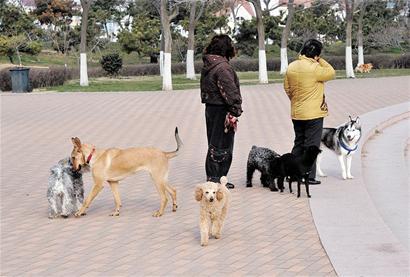 动物饲养区聊天背景图