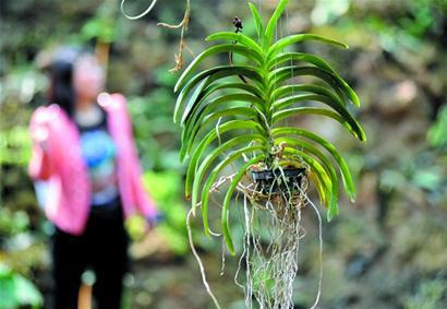 植物与动物不同,它们吸收的是二氧化碳